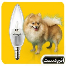 لامپ ویتامینه  سگ 1وات